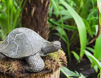 Turtle Sculpture in Safari